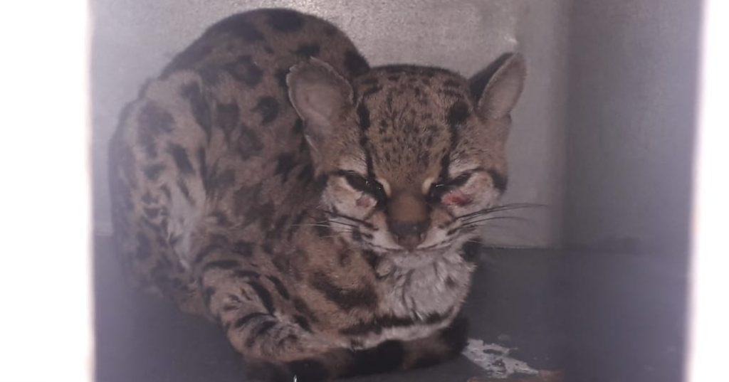 gato-resgatado