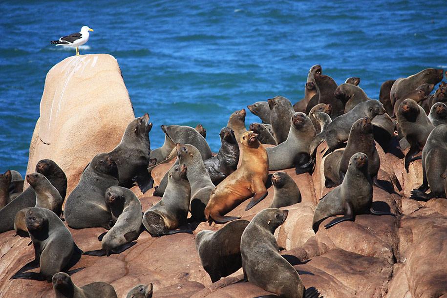 Cabo Polonio um paraíso perdido no tempo
