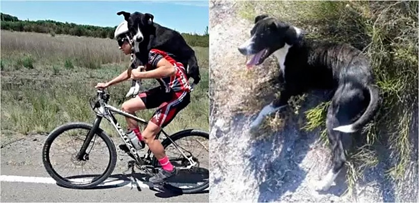 Ciclistas salva a vida de um cãozinho desidratado