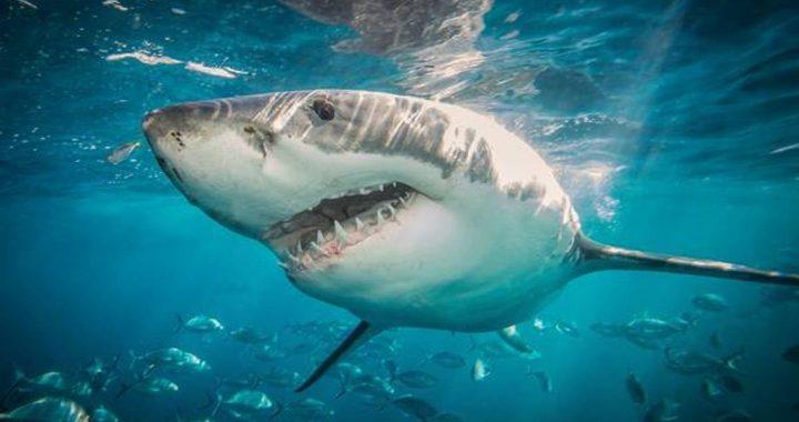 Tubarão atravessa rede de proteção e ataca