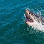 Tubarão persegue surfista